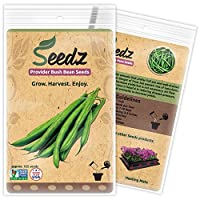 CERTIFIED ORGANIC SEEDS (Appr. 125) - Green Bean Seeds - Heirloom Seeds Beans Collection - Non GMO, Non Hybrid, USA