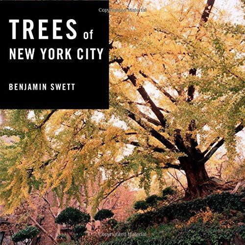 new york city trees - 3