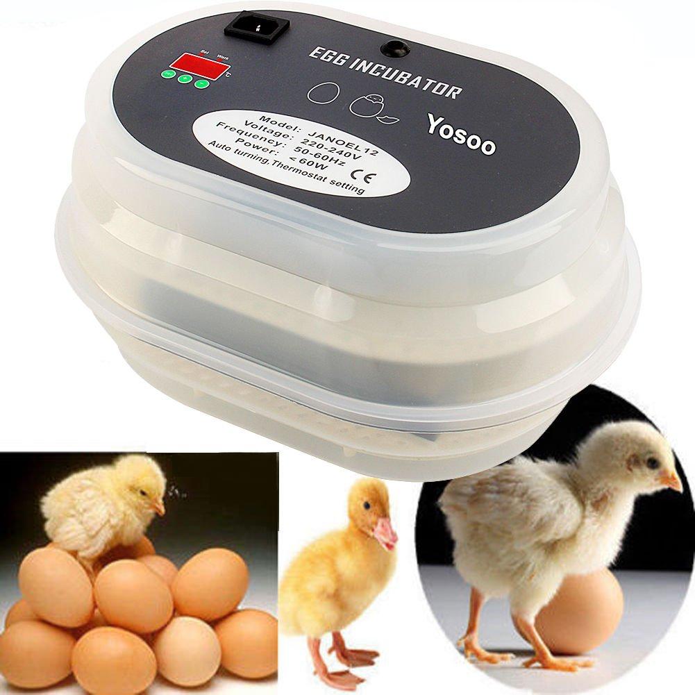 Automatische Brutmaschine für 12 Eier