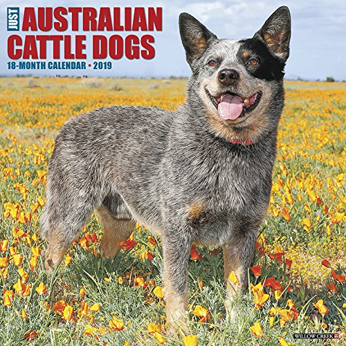 - Just Australian Cattle Dogs 2019 Wall Calendar (Dog Breed Calendar)