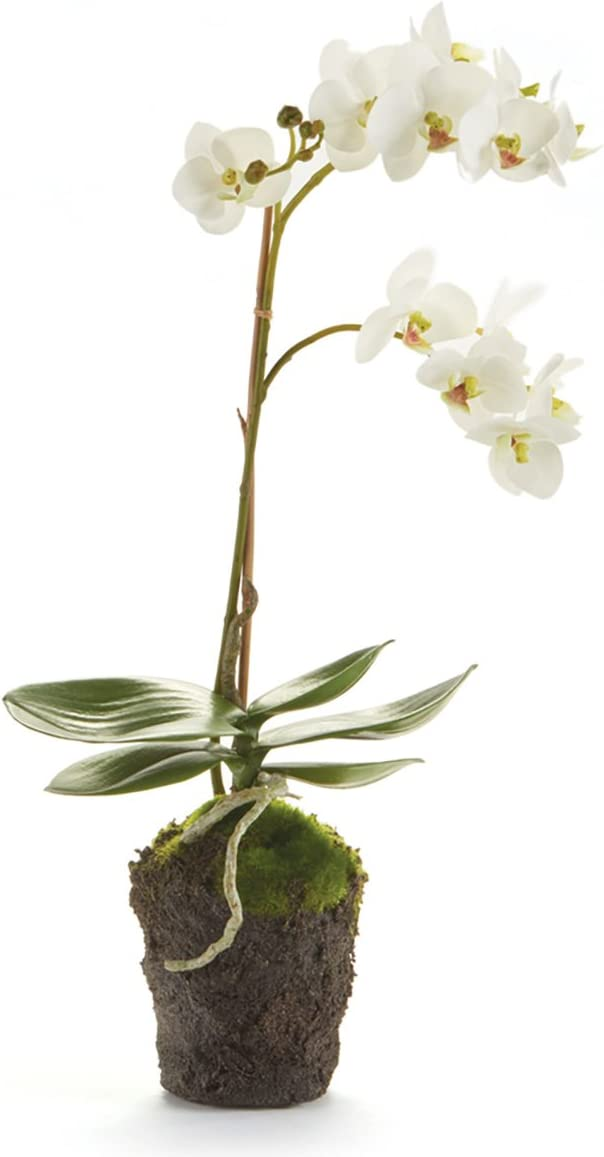 Napa Home & Garden Conservatory PHALAENOPSIS Orchid Drop-in 17-INCH