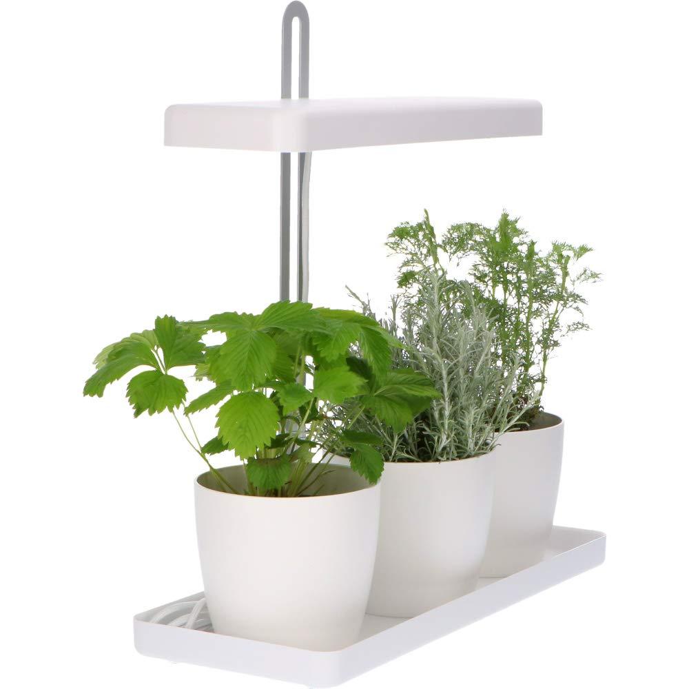 Kräuter Pflanzen Gewächshaus für innen 17-teilig Zimmergewächshaus