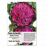 Package of 100 Seeds, Cauliflower Purple of Sicily (Brassica oleracea) Seeds By Seed Needs