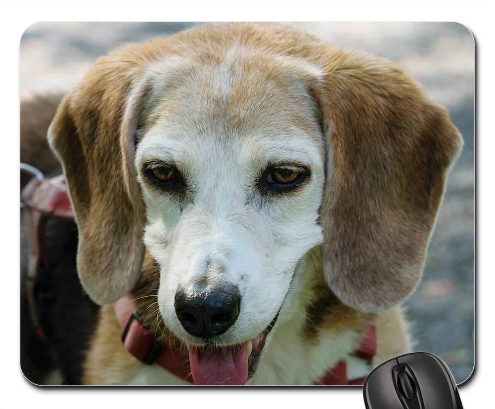 犬マウスパッド 1121-008 260*210*3 mm B07KR35VSP Fl13 260*210*3 mm 260*210*3 mm|Fl13