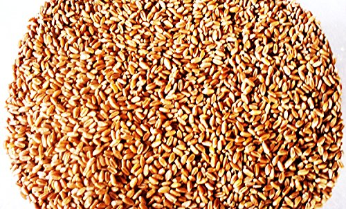 Wheat BerriesHard Red Wheat