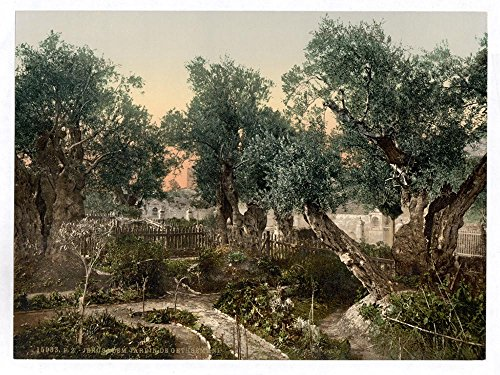 Garden of Gethsemane, Jerusalem, Holy Land by Historic Photos