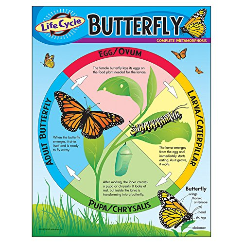(Trend Enterprises Inc. Life Cycle of a Butterfly Learning Chart, 17