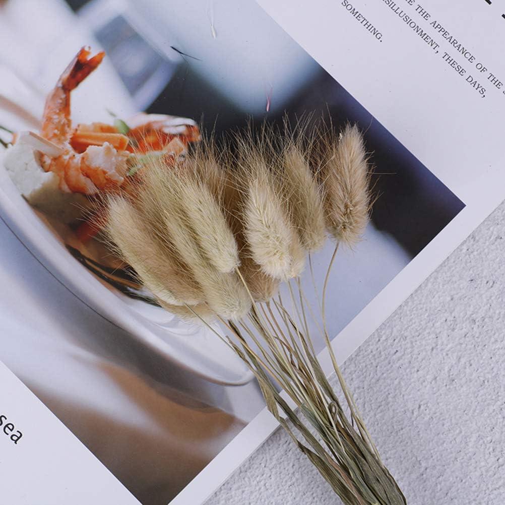 Picta Bunny Tails Dried Flowers Bouquets Rabbit Tail Grass Lagurus Ovatus