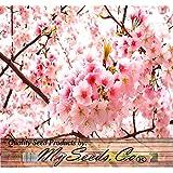 BIG PACK - (100) JAPANESE SAKURA FLOWERING CHERRY, Prunus serrulata Tree Seed - Japanese Cherry Blossom Tree Seeds - By MySeeds.Co (Big Pack - Japanese Sakura)