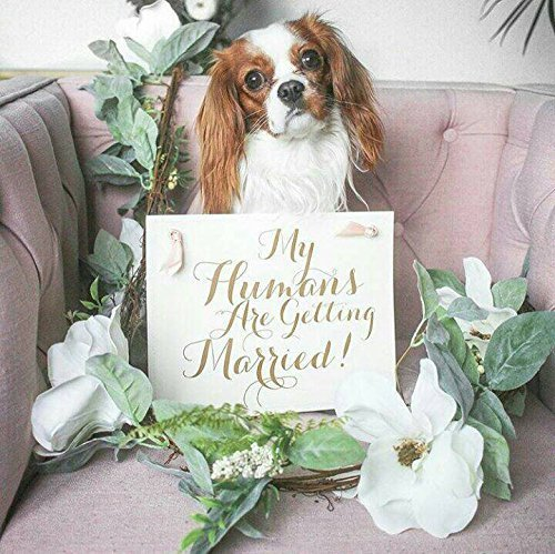 (My Humans Are Getting Married Wedding Banner For Dog Ring Bearer or Wedding Announcement Proposal Banner for Puppy | Handmade in the USA)