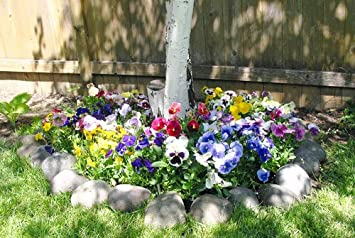 Amazoncom Mixed Pansy Tree Ring Mat Grow Pansies Tree Border