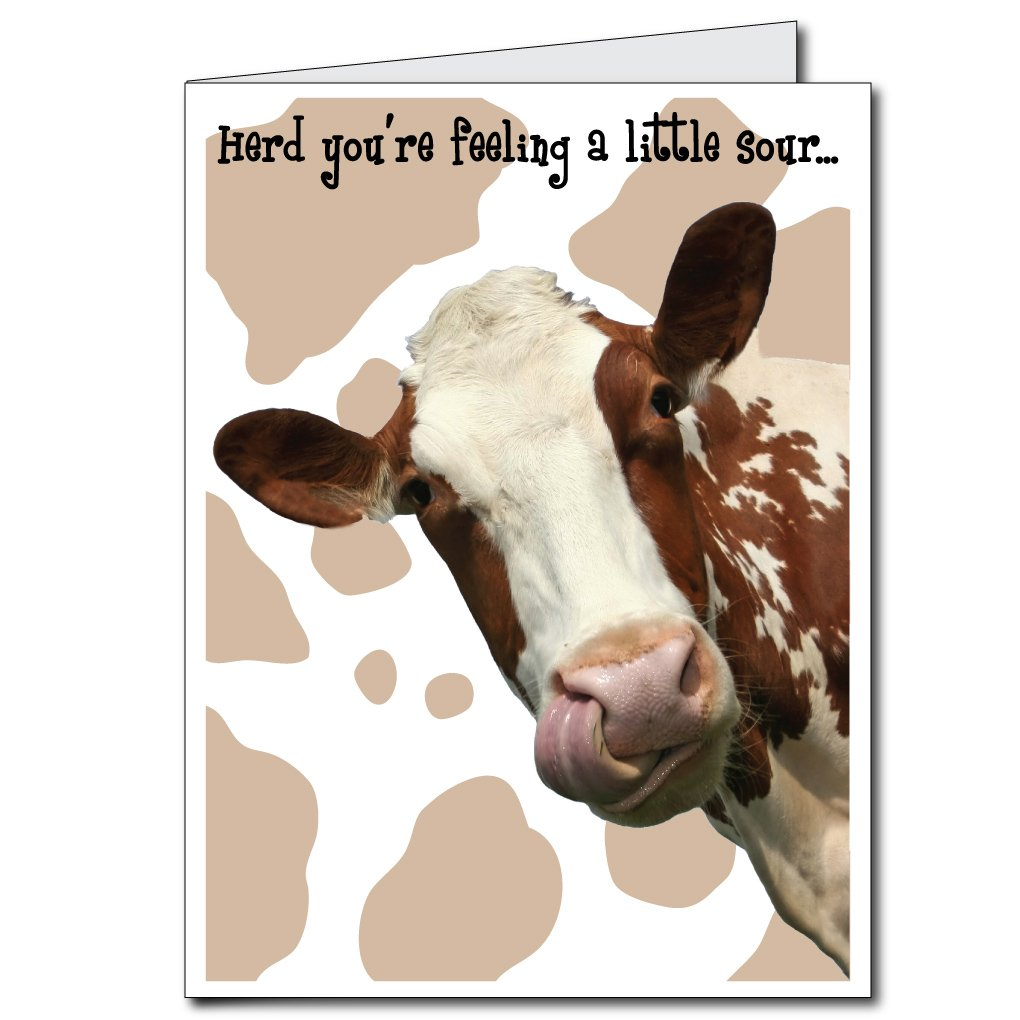 Amazon VictoryStore Jumbo Greeting Cards Giant Get Well Card Cow 2 X 3 With Envelope Kitchen Dining