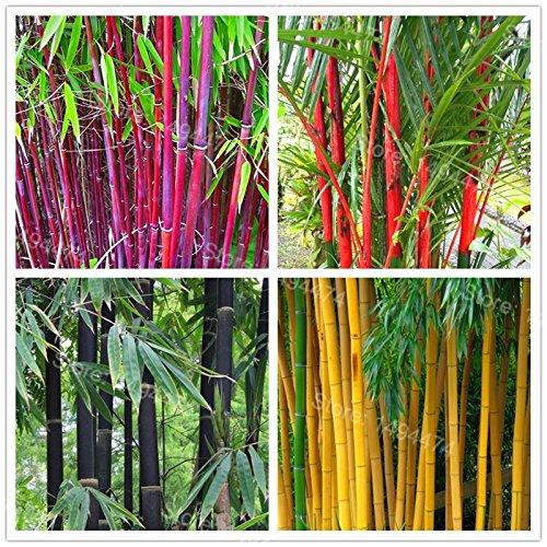 Mix Colors Bamboo Plantas Fresh Giant Bamboo Bonsai Tree Plants phyllostachys Home Garden 10 Pieces