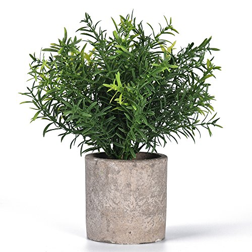 Shuheng Mini Artificial Plant Potted Fake Green Grass with Pot for Home Decor (Z, Green) by Shuheng