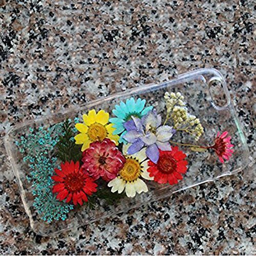Rebbygena iPhone 6 Plus iPhone 6s Plus Case and Cover Real Flower Pressed iPhone 6/6s Plus Case Protector Clear Floral Mobile Phone Case 5.5 inch ¡­ (Real Apple)