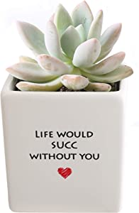 Costa Farms Mini Succulent Fully Rooted Live Indoor Plant, 2.5-Inch Echeveria, in Life Would Succ Ceramic