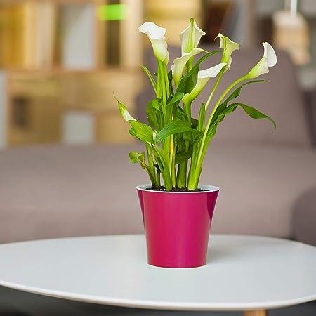 self watering Planter - Indoor Flower Pot product image