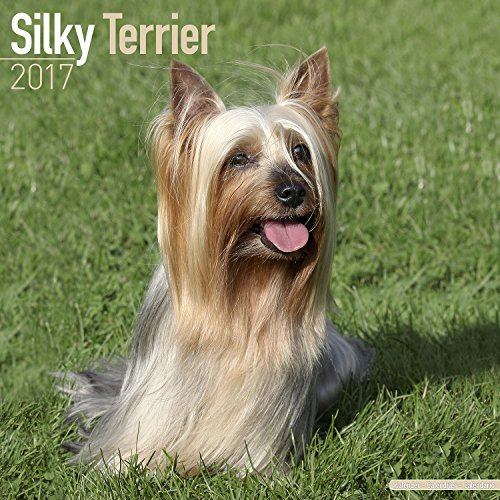 Silky Terrier Calendar 2017 - Dog Breed Calendar - Wall Calendar 2016-2017