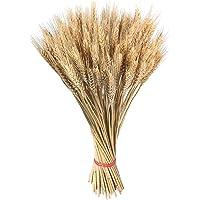 100 hastes de trigo seco, flores secas naturais, buquê de grama de trigo, decoração para casa, Natal, mesa de casamento…