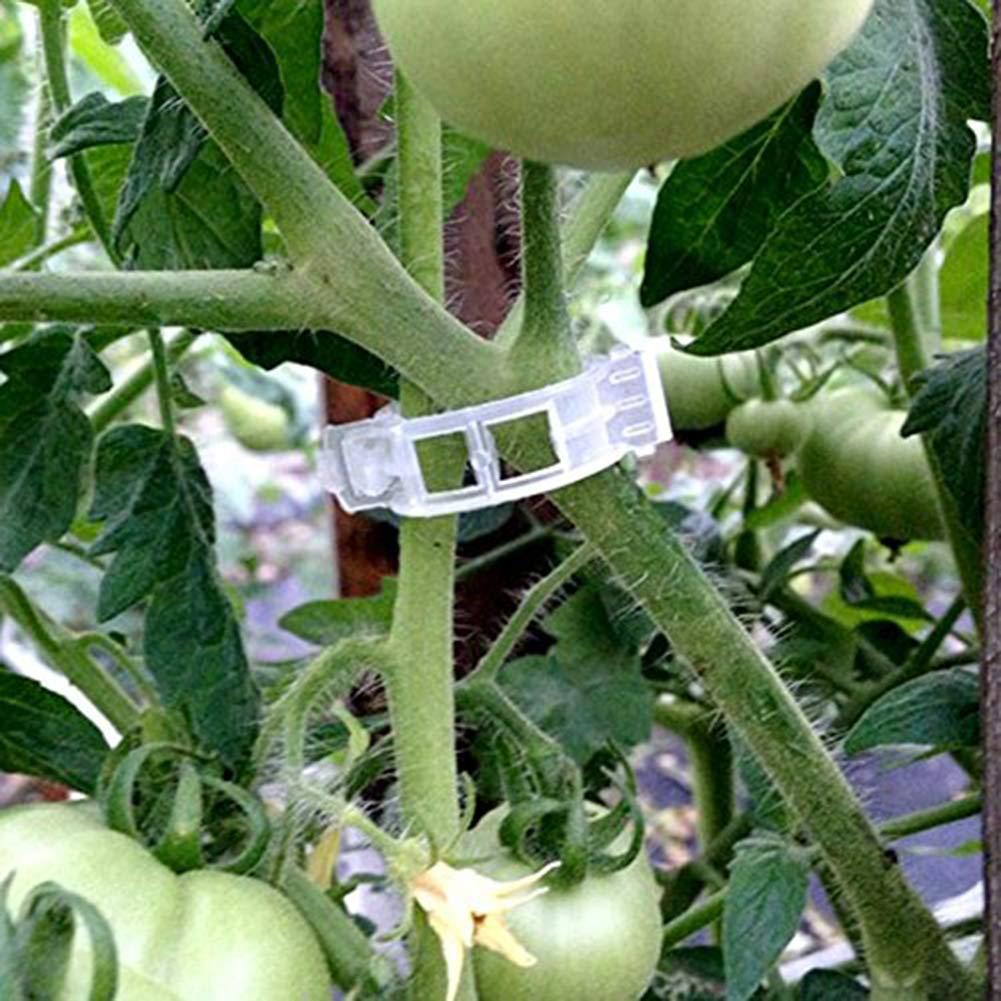 Super1798 100 clips para plantas, hortalizas de jardín, tomate ...