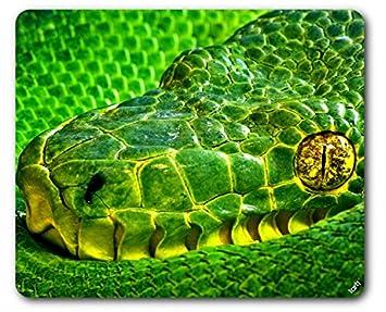 Serpientes - Víbora De Palma Verde, Bothriechis Lateralis II Alfombrilla para Ratón (23 x 19cm): Amazon.es: Hogar