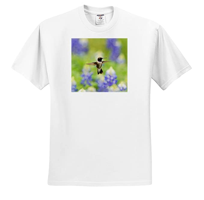 Amazon com: 3dRose Danita Delimont - Hummingbirds - Black