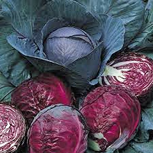Cabbage, Red Acre seeds, Organic, NON-GMO, 50+ seeds per package,This hardy, healthy and delicious crop is easy to grow and ideal for small and large gardens (Best Cabbage For Slaw)