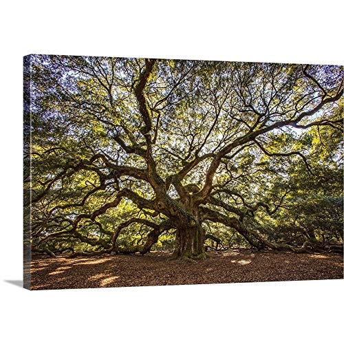 Holly Looney Solid-Faced Canvas Print Wall Art Print Entitled USA, South Carolina, Charleston, Angel Oak 36