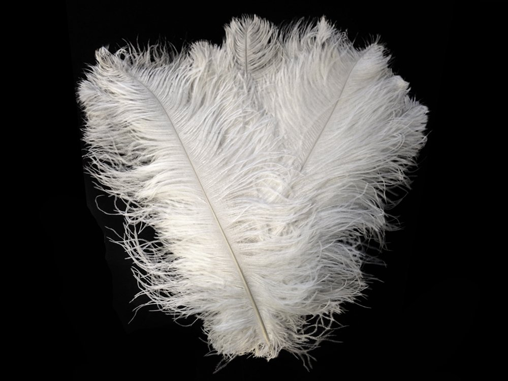 Ostrich Plumes | Wing Plumes Wholesale Feathers (Bulk) - White 30-35'', 1/2 Lb SWA