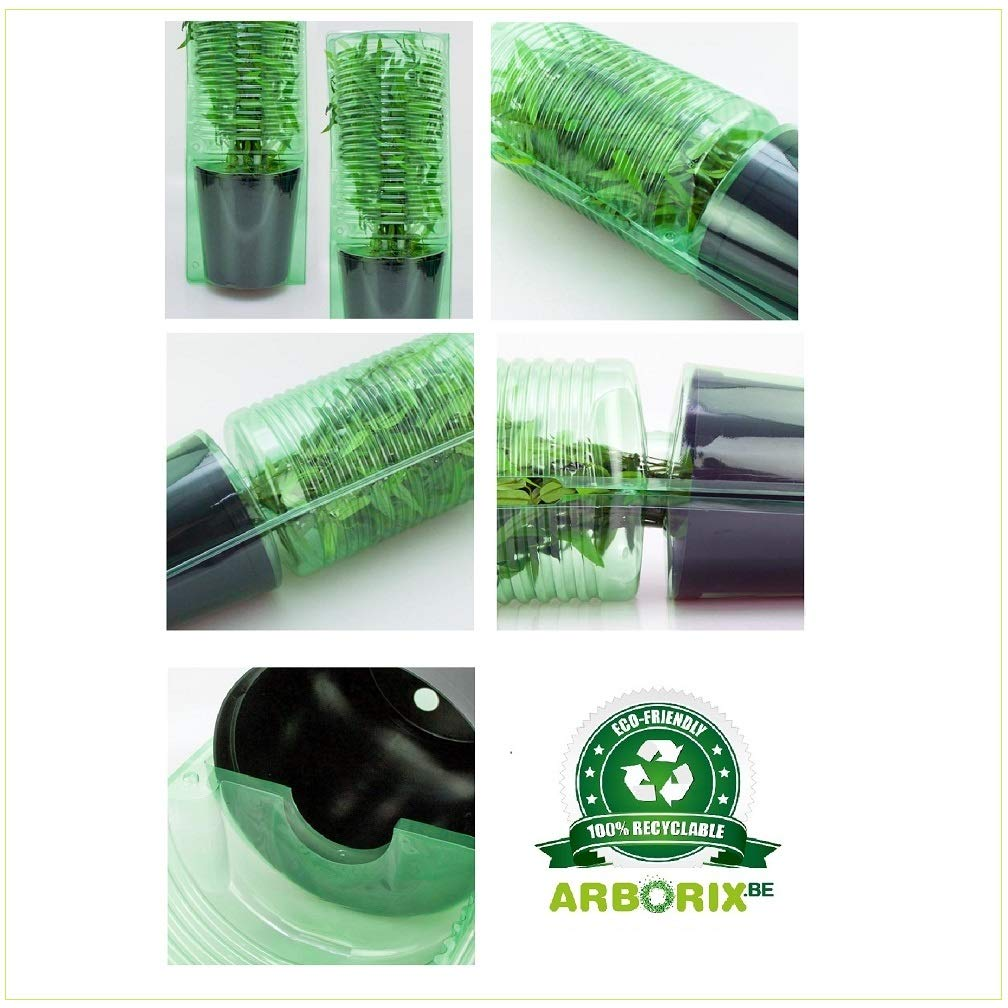 Arbuste aux bonbons Profusion 40-60 cm en conteneur Callicarpa Bodinieri Profusion