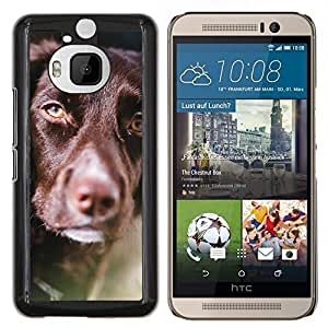 KLONGSHOP // Cubierta de piel con cierre a presión Shell trasero duro de goma Protección Caso - Retriever chocolate raza del perro de oro - HTC One M9Plus M9+ M9 Plus //