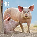 Pigs 2018 12 x 12 Inch Monthly Square Wall Calendar, Domestic Pet Farm Animals