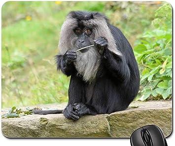 Alfombrilla de ratón - Mono Macaco de Cola de león Bosque Salvaje ...
