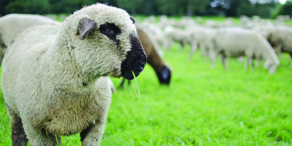 Nature's Seed PB-SAS-1-A 1 Acre South-Atlantic Transitional Sheep Pasture Blend