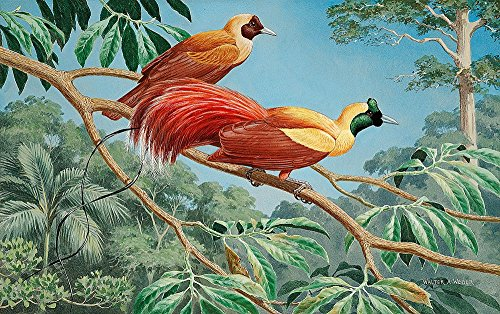 (Red Birds of Paradise Wallpaper Wall Mural - Self-Adhesive - Multiple Sizes - National Geographic Image from Magic Murals)