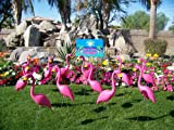 Flamingo Extravaganza - This is a bouquet of Pink Flamingo Lawn Ornaments and yard signs. 20 Premium Flamingos, 30 Flamingo Twirlers, 1 You've Been Flocked yard sign and 1 Happy Birthday lawn sign.
