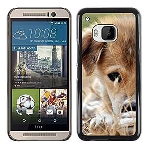 TopCaseStore / la caja del caucho duro de la cubierta de protección de la piel - Mongrel Puppy Brown White Grass Dog - HTC One M9
