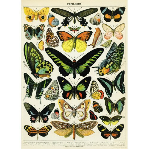 Butterfly Large Poster - Decorative Wrap 20X28 Butterflies
