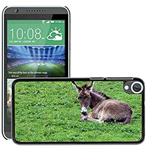 Super Stella Slim PC Hard Case Cover Skin Armor Shell Protection // M00145330 Donkey Donkey Foal Foal Baby Animal // HTC Desire 820