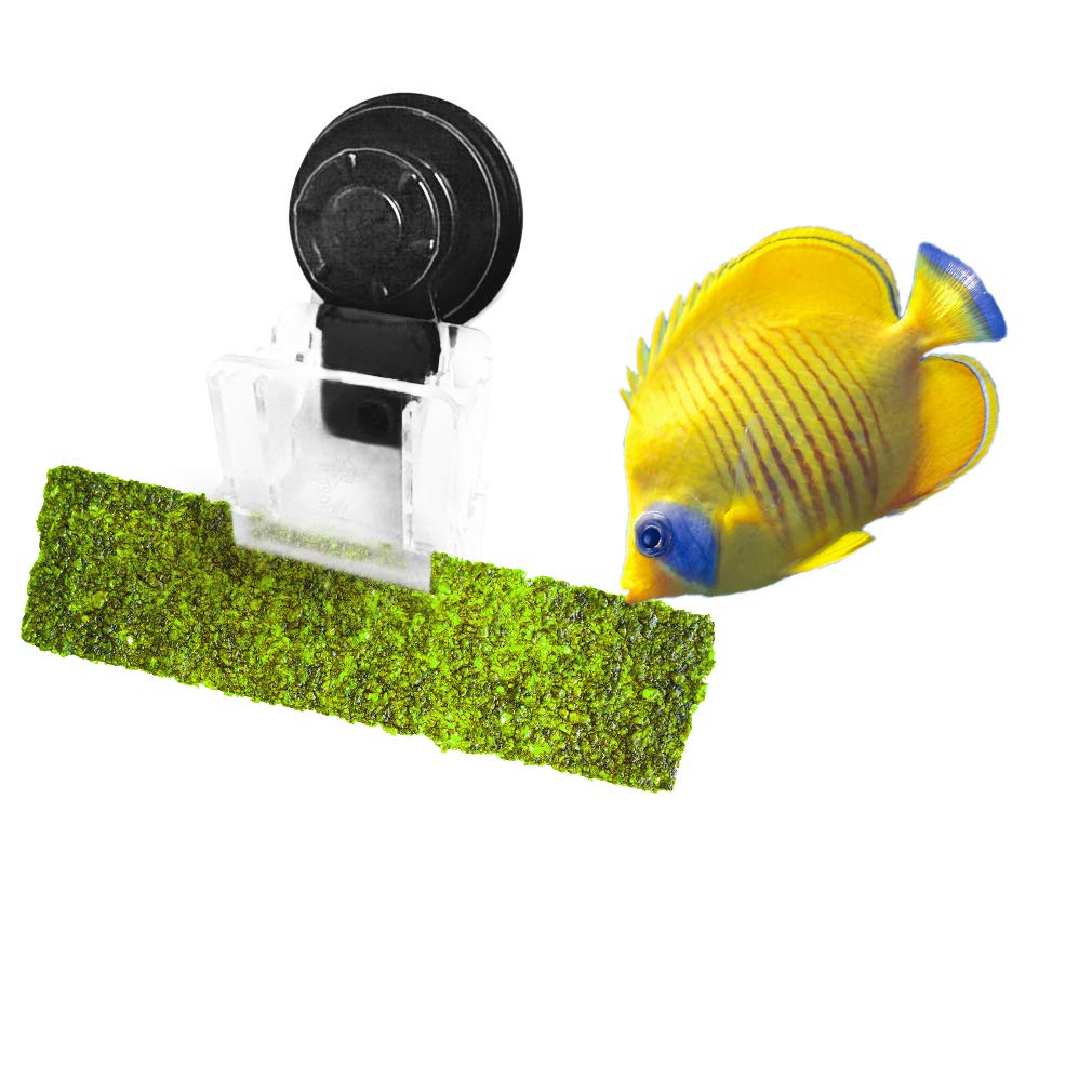 """Luffy Aquarium Clip to Hold Veggies, Betta Bed, Feeding Accessories, 4"""" x 2"""", Plastic, Black, Suction Cup with Lock…"""