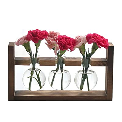 Ivolador Desktop Glass Planter Bulb Vase with Retro Solid Wooden Stand for Hydroponics Plants Home Garden Wedding Decor (3 Bulb Vase)…: Home & Kitchen