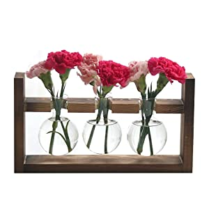 Ivolador Desktop Glass Planter Bulb Vase with Retro Solid Wooden Stand for Hydroponics Plants Home Garden Wedding Decor (3 Bulb Vase)