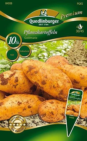 PFLANZKARTOFFEL SIEGLINDE 2,5 kg Pflanzkartoffeln zertifizier Saatkartoffel früh