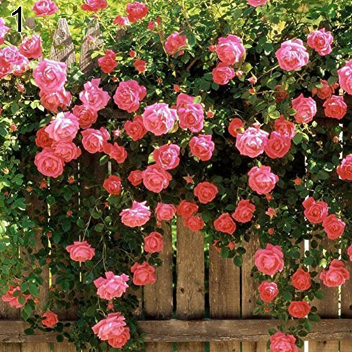 GMNP0di% Climbing Rose Seeds for Planting Garden Home Balcony Fences Decor Plants Flowers Pink