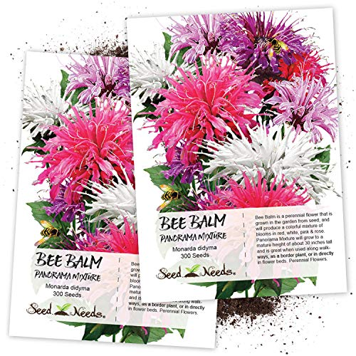 Seed Needs, Bee Balm Panorama Mixture (Monarda didyma) Twin Pack of 300 Seeds Each ()