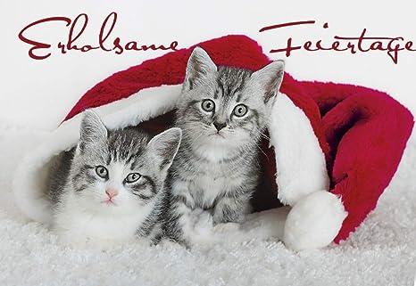 Natale Gattino Divertente Gatti Cartoline Di Natale 2 Biglietti Con