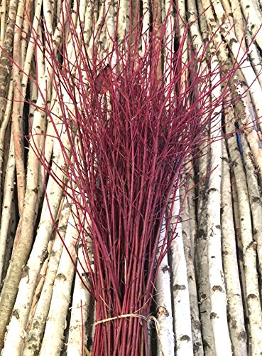 Decorative Red Dogwood Branches