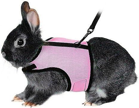UEETEK - Arnés suave con correa elástica para conejos (talla XL ...
