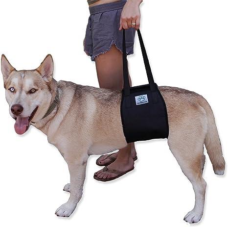 Perro elevación arnés con asa. Apoyo rehabilitación Canines ayuda ...