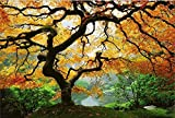 Startonight Canvas Wall Art Maple Tree, Nature USA Design for Home Decor, Dual View Surprise Artwork Modern Framed Ready to Hang Wall Art 31.5 X 47.2 Inch 100% Original Art Painting